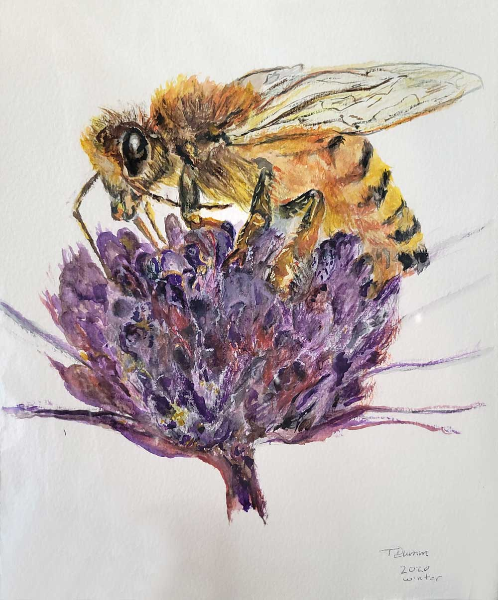 Watercolor by Tom Dumm - Bee on Flower